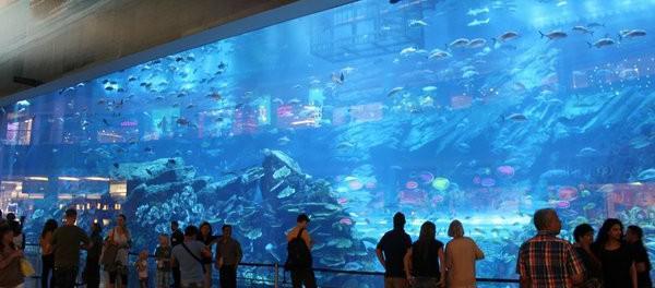 Acuario en Dubai Mall