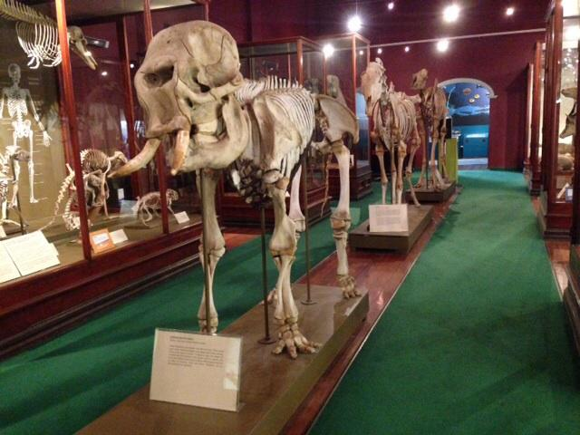 Western Australia Museum