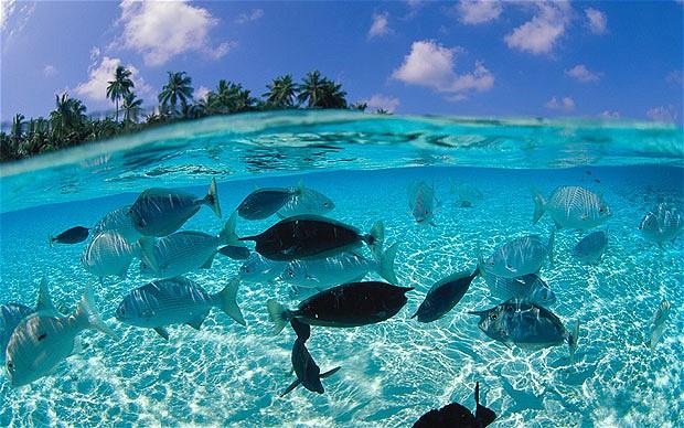 C mo llegar a las islas maldivas for Mejores islas de maldivas